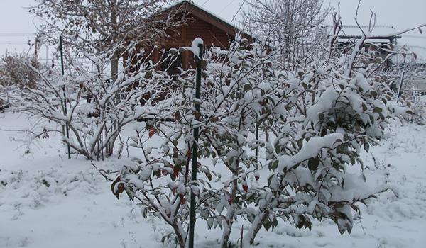 冬:雪景色